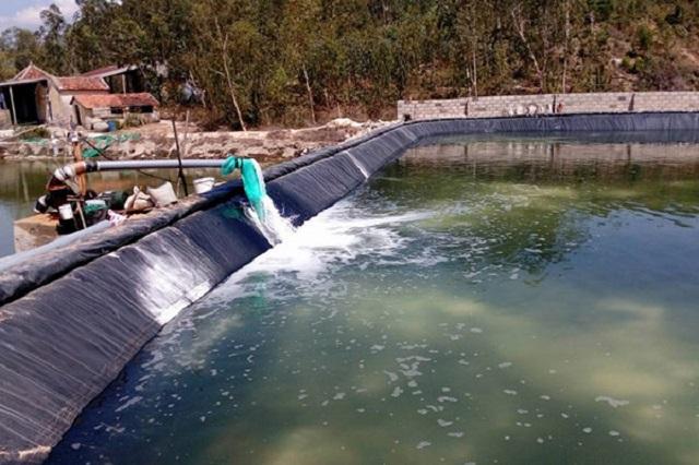 Nguồn nước thải nuôi trồng thủy sản