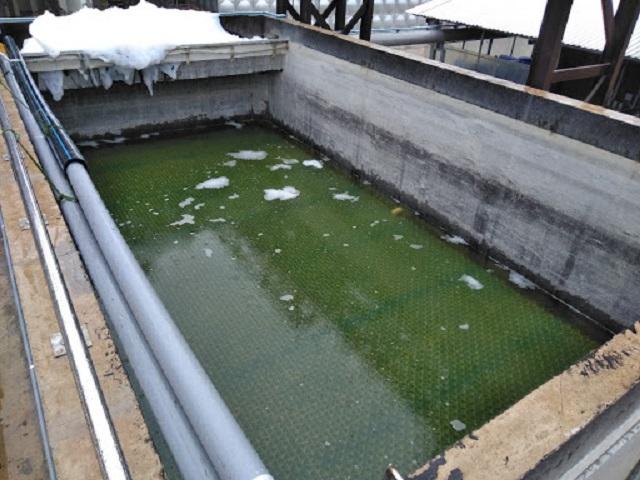 Phương pháp xử lý nước thải bằng lọc sinh học